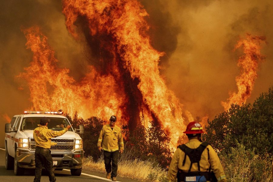 Is Trump right about the cause of the California Wildfires?