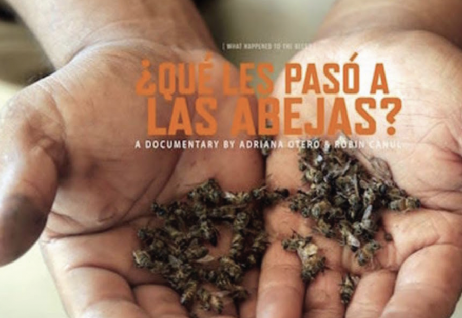 """Latin American Culture Club's Colloquium with Filmmaker of """"What Happened to the Bees"""""""